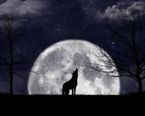 loboi